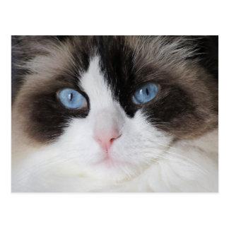 Querido observado azul del gato del gatito postal