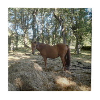Quiero un caballo azulejo