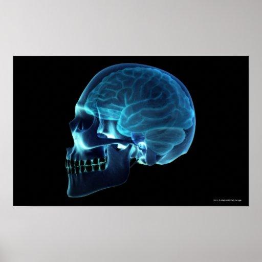 Radiografía del cerebro dentro de un cráneo posters