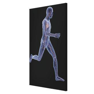 Radiografía del sistema vascular en un hombre corr impresión en lienzo estirada