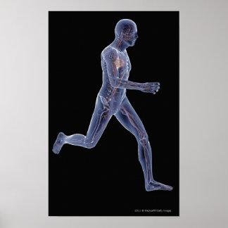 Radiografía del sistema vascular en un hombre corr poster