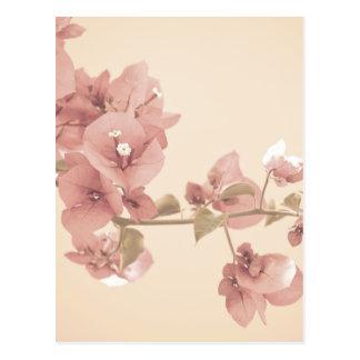 Rama en colores pastel del flor postal