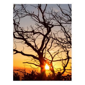Ramas de árbol que bailan en la luz del sol postal