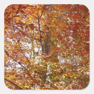 Ramas de la naturaleza anaranjada del otoño de las pegatina cuadrada