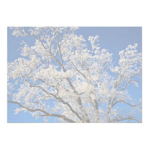 ramas Frost-cubiertas, invierno de Inglaterra Comunicado Personal