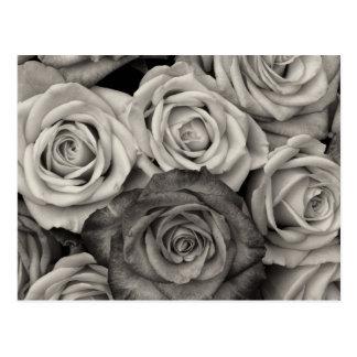 Ramo blanco y negro bonito de los rosas de flores postal