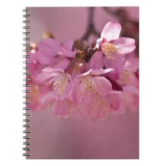 Ramo rosado delicado de las flores de cerezo de cuadernos