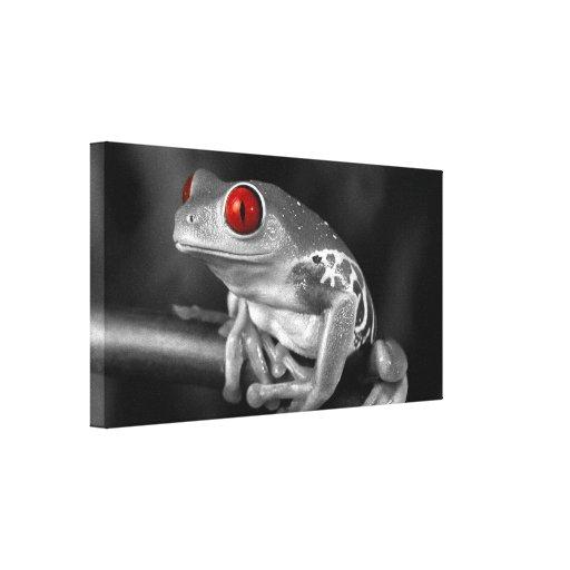 Rana arbórea observada rojo lona estirada galerías