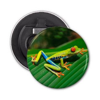 Rana arbórea rojo-observada verde tropical de la abrebotellas redondo