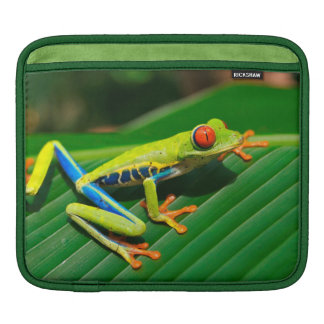 Rana arbórea rojo-observada verde tropical de la funda para iPad