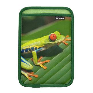 Rana arbórea rojo-observada verde tropical de la funda para iPad mini