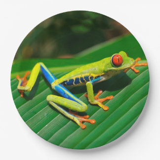 Rana arbórea rojo-observada verde tropical de la plato de papel
