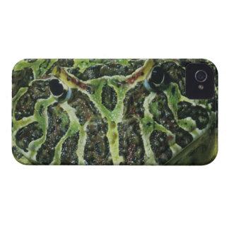Rana de cuernos adornada, (ornata de Ceratophrys), Case-Mate iPhone 4 Cárcasas
