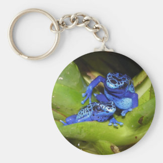 Ranas azules del dardo del veneno en la hoja 1 llavero redondo tipo chapa