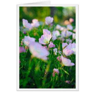 Ranúnculos en verano tarjeta de felicitación