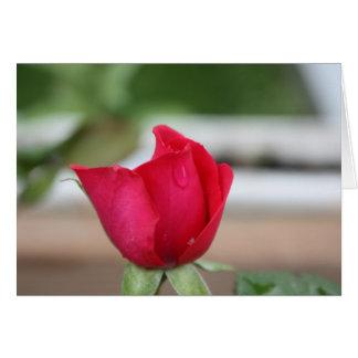 Rasgón de un capullo de rosa tarjeta de felicitación