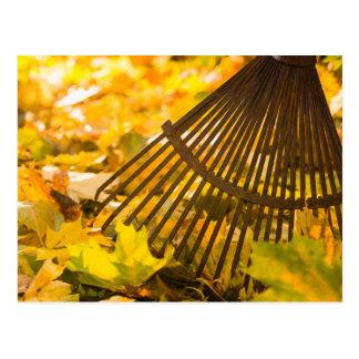 Rastrillo y hojas postal