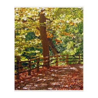 Rastro del bosque del otoño impresión acrílica
