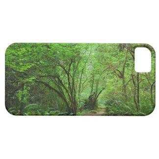 Rastro en bosque de la secoya funda para iPhone SE/5/5s