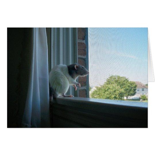 """Rata contemplativa """"deseo usted estaba aquí"""" tarjeta pequeña"""