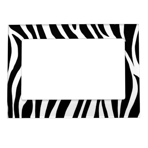 Rayas blancos y negros de la cebra marcos magneticos para fotos