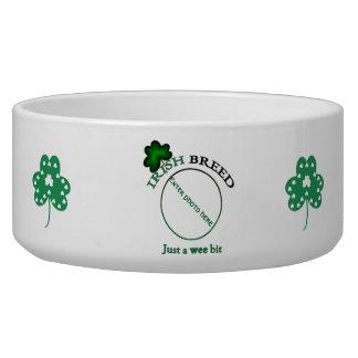 Raza-apenas irlandesa un pedazo pequenito comedero