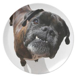 Raza del perro del boxeador platos de comidas