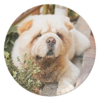 Raza del perro del perro chino de perro chino platos para fiestas