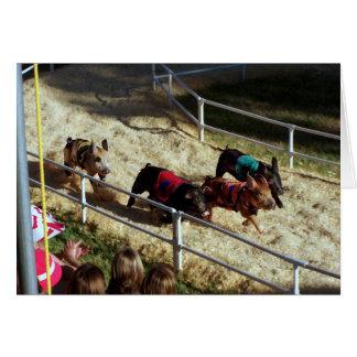 Raza en la feria del condado - tarjeta del cerdo