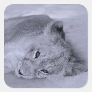 Reclinación adorable del cachorro de león pegatina cuadrada