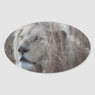 Reclinación blanca africana del león calcomania ovaladas personalizadas
