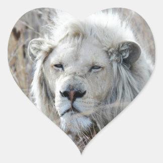 Reclinación blanca africana del león pegatina en forma de corazón