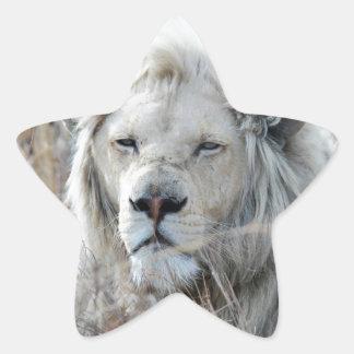 Reclinación blanca africana del león pegatina en forma de estrella