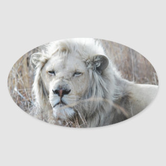 Reclinación blanca africana del león pegatina ovalada