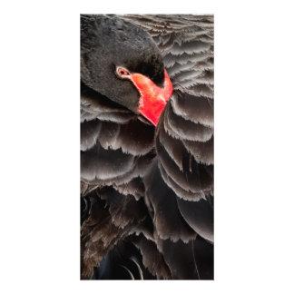 Reclinación del cisne negro tarjetas personales