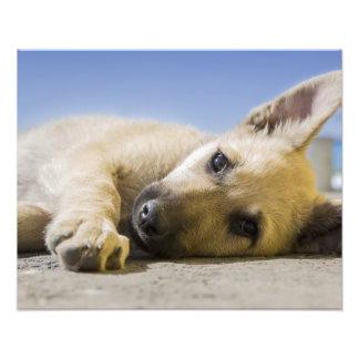 Reclinación linda del perro de perrito arte con fotos