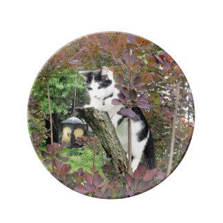 Recortadora de chapas en el árbol de humo púrpura plato de porcelana