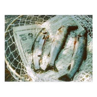 Red de pesca y postal retras de la trucha