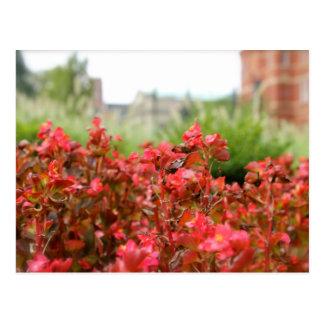 RedFlowers01