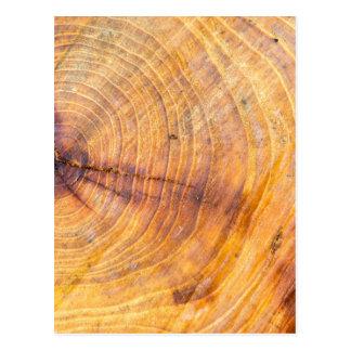 Reduzca un árbol con los anillos anuales postal