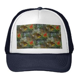 Reflejo de lujo del Goldfish Gorras