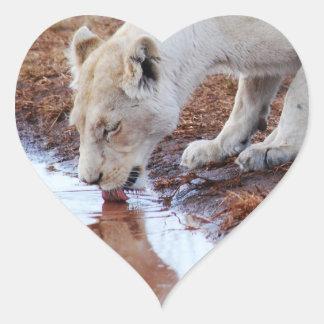Reflexión blanca africana del león pegatina en forma de corazón