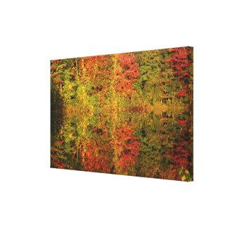 Reflexiones de los árboles del otoño