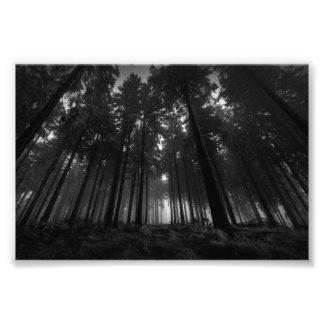 Regalos blancos y negros frescos del silencio de fotografias