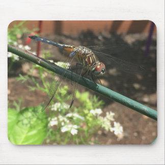 Regalos de la libélula alfombrilla de ratón