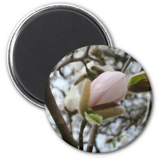 Regalos del día de madres 19 flores de la magnolia imanes para frigoríficos