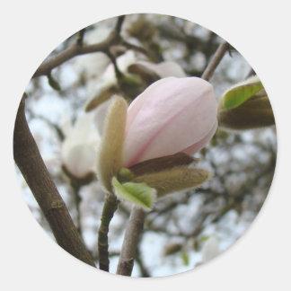 Regalos del día de madres 19 flores de la magnolia pegatinas
