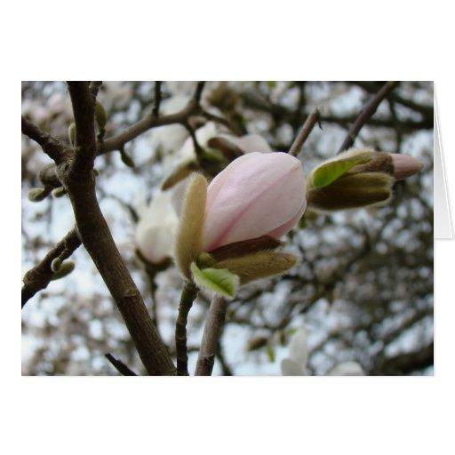 Regalos del día de madres 19 flores de la magnolia felicitacion