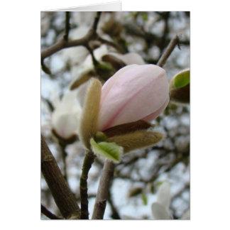 Regalos del día de madres 19 flores de la magnolia felicitaciones