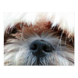 regalos lindos de la imagen de la cara del perrito postales